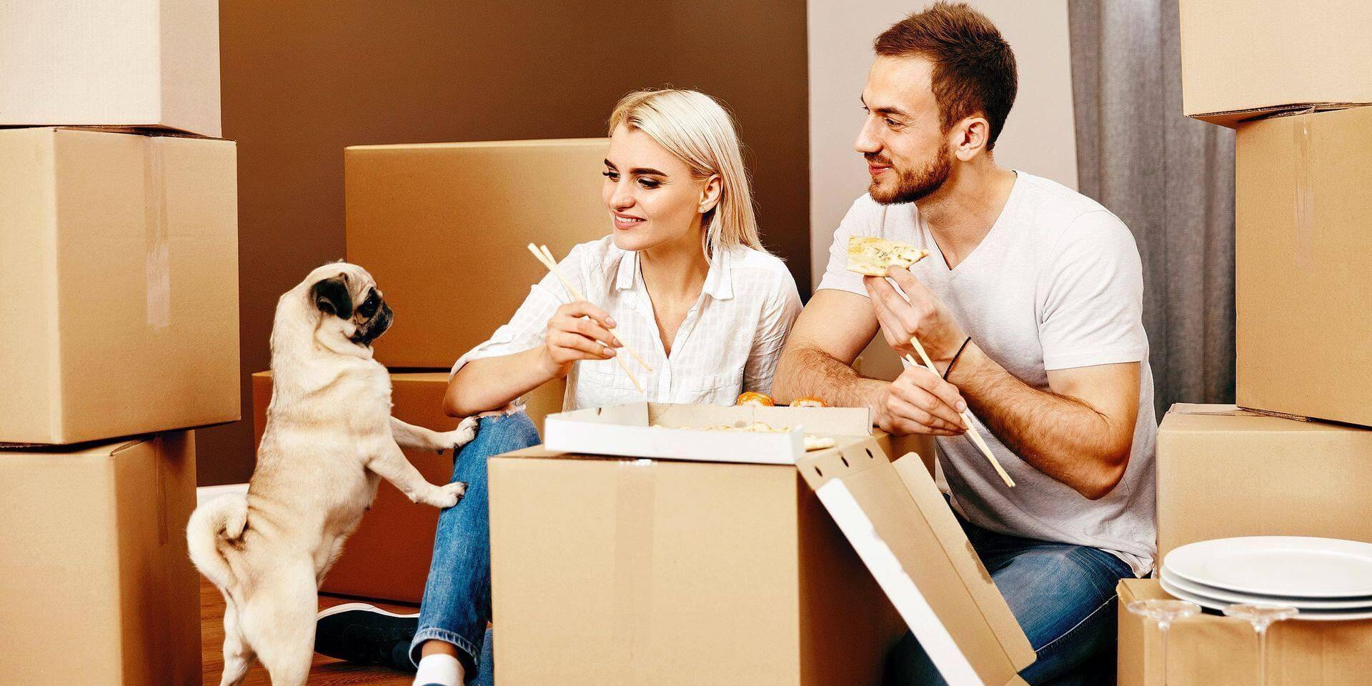 Comment déménager avec des animaux de compagnie?